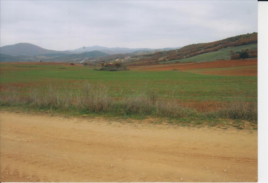 Земля Халкидики-Другое, Греция, 20000 сот. - фото 1