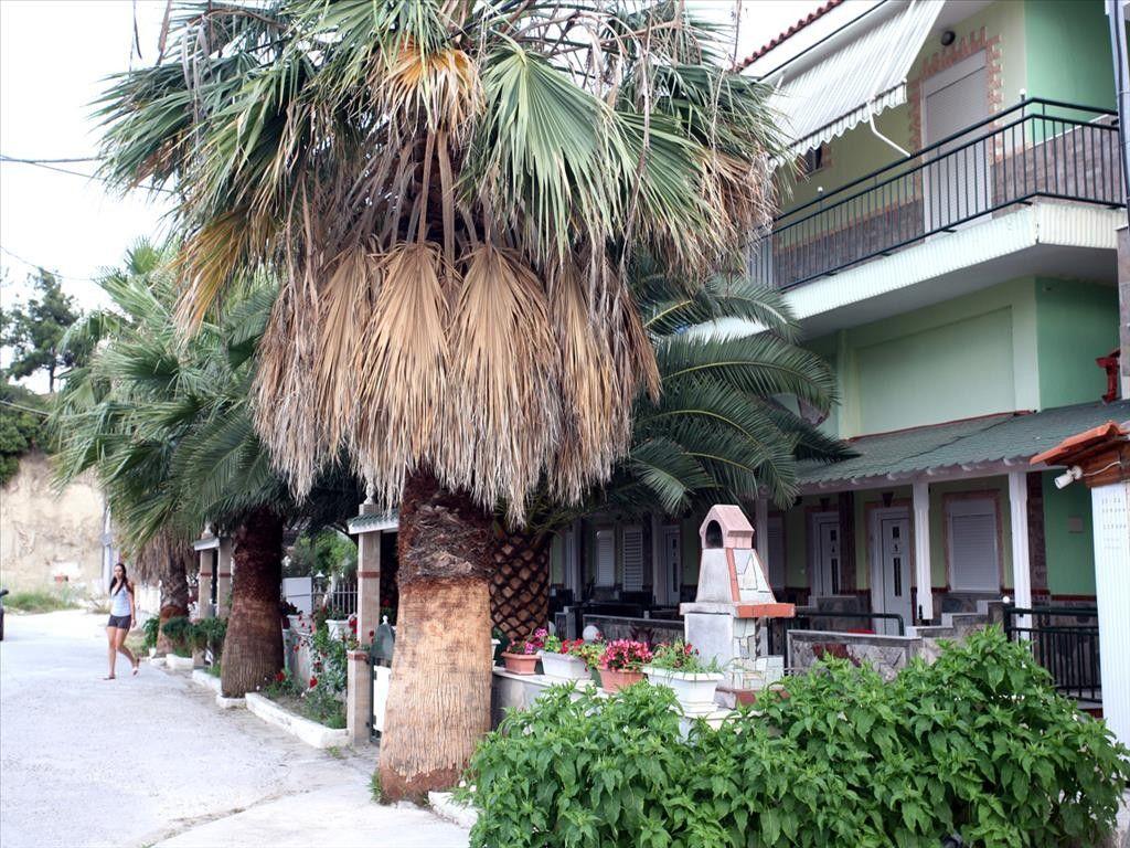Отель, гостиница Халкидики-Кассандра, Греция, 500 м2 - фото 1