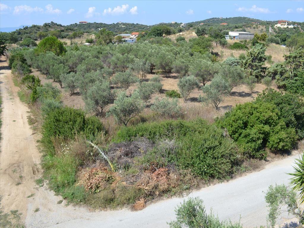 Земля Халкидики-Афон, Греция, 2490 сот. - фото 1