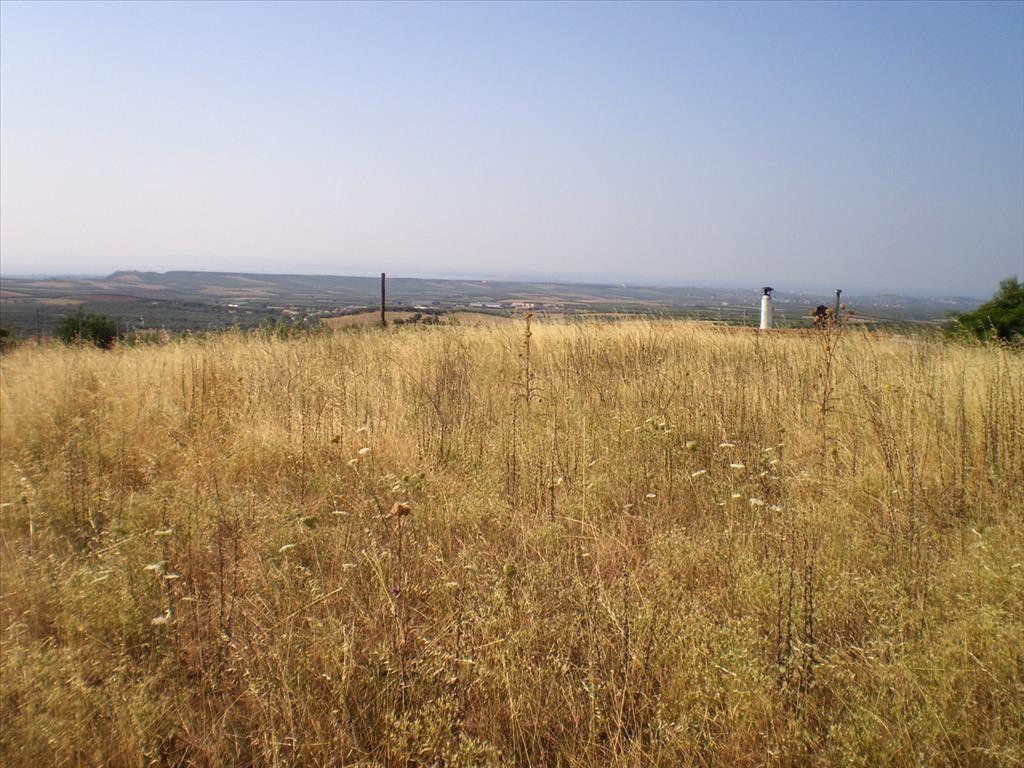 Земля Халкидики-Другое, Греция, 2100 сот. - фото 1