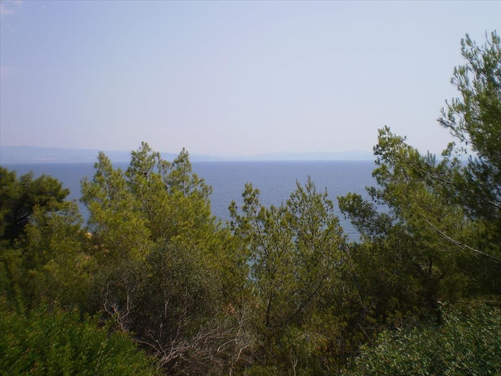 Земля Халкидики-Кассандра, Греция, 3210 сот. - фото 1