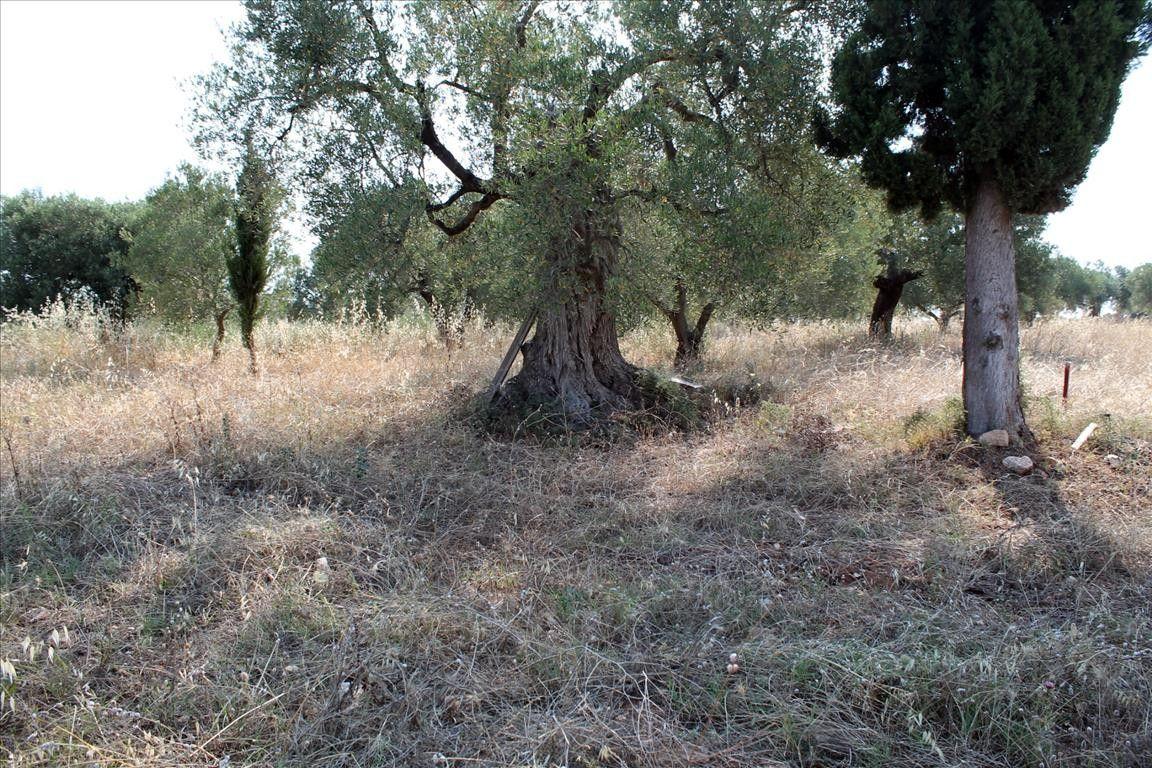 Земля Халкидики-Ситония, Греция, 2500 сот. - фото 1