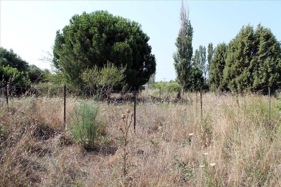 Земля Халкидики-Ситония, Греция, 425 сот. - фото 1