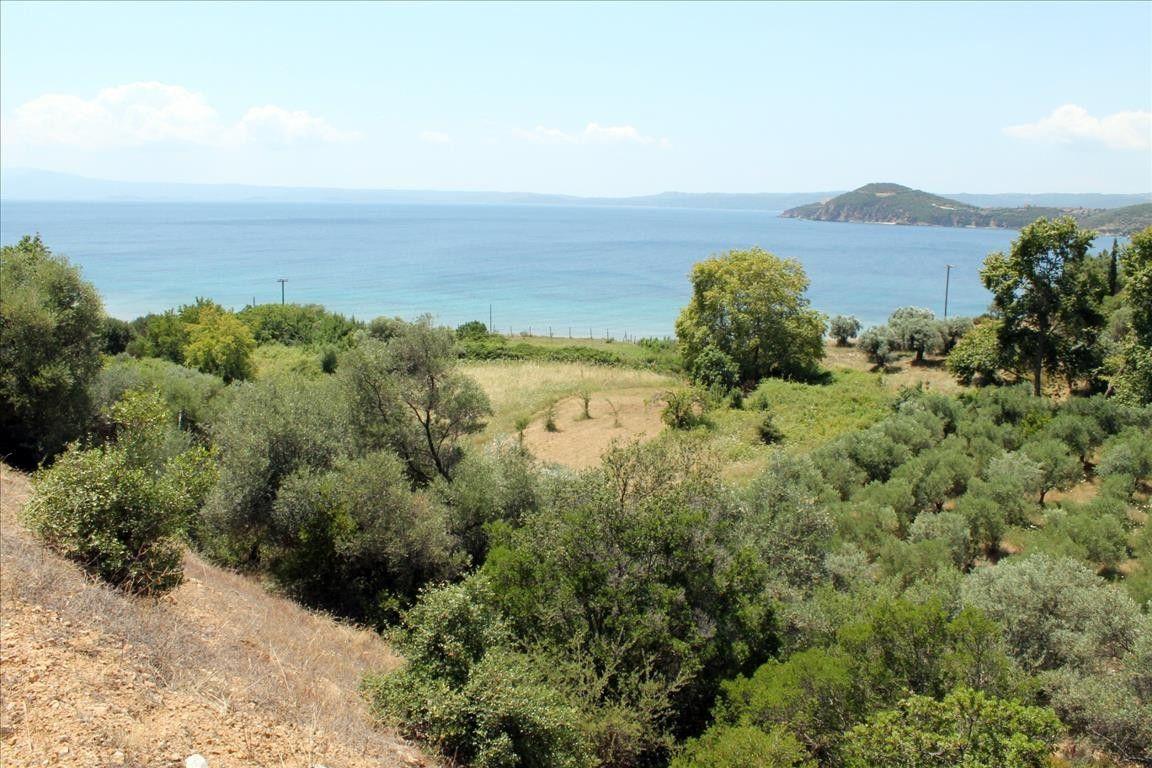 Земля Халкидики-Афон, Греция, 1300 сот. - фото 1