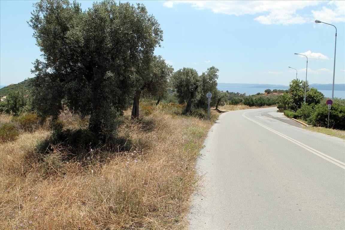 Земля Халкидики-Ситония, Греция, 5568 сот. - фото 1