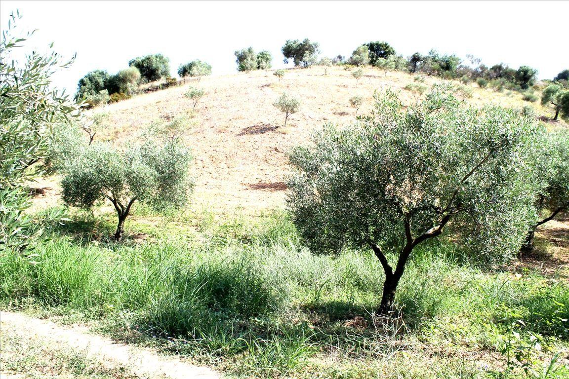 Земля Халкидики-Ситония, Греция, 9000 сот. - фото 1