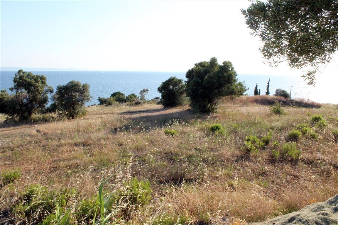 Земля Халкидики-Ситония, Греция, 8500 сот. - фото 1