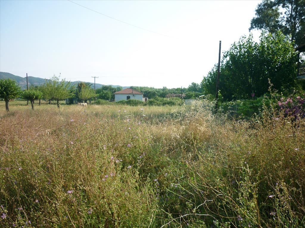 Земля Халкидики-Ситония, Греция, 2420 сот. - фото 1