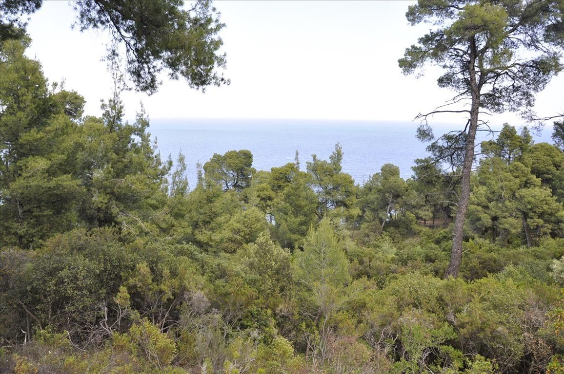 Земля Халкидики-Ситония, Греция, 12150 сот. - фото 1