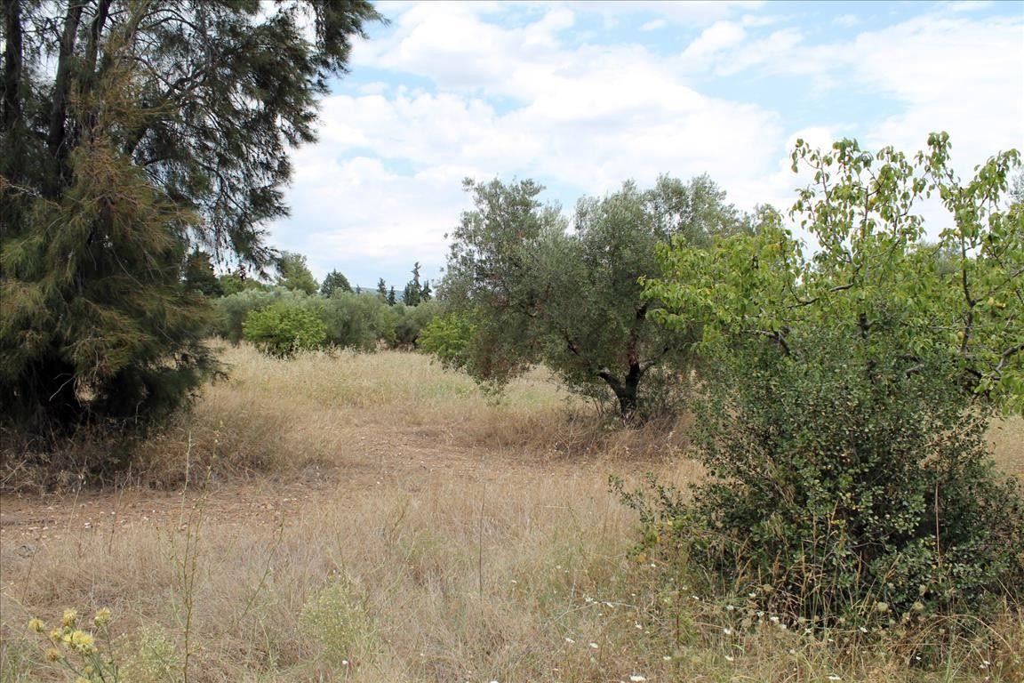 Земля Халкидики-Ситония, Греция, 12081 сот. - фото 1