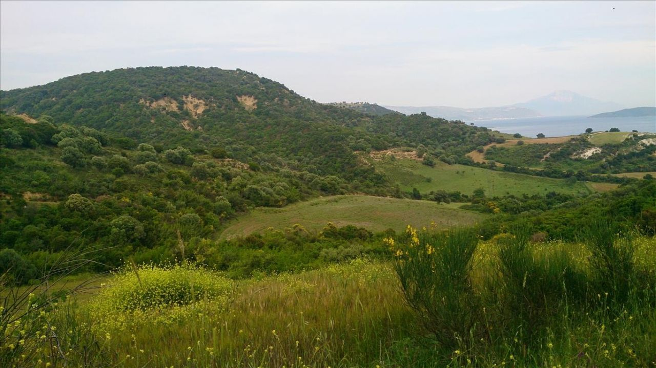 Земля Халкидики-Афон, Греция, 11300 сот. - фото 1