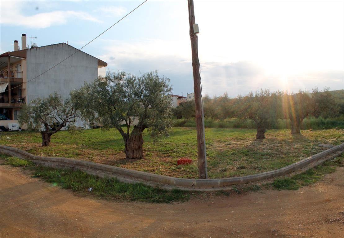 Земля Халкидики-Другое, Греция, 435 сот. - фото 1