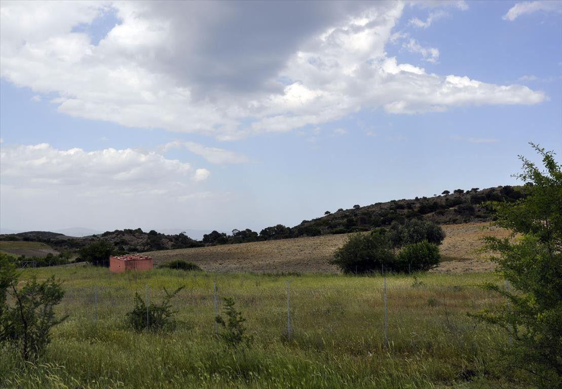 Земля Халкидики-Ситония, Греция, 4000 сот. - фото 1