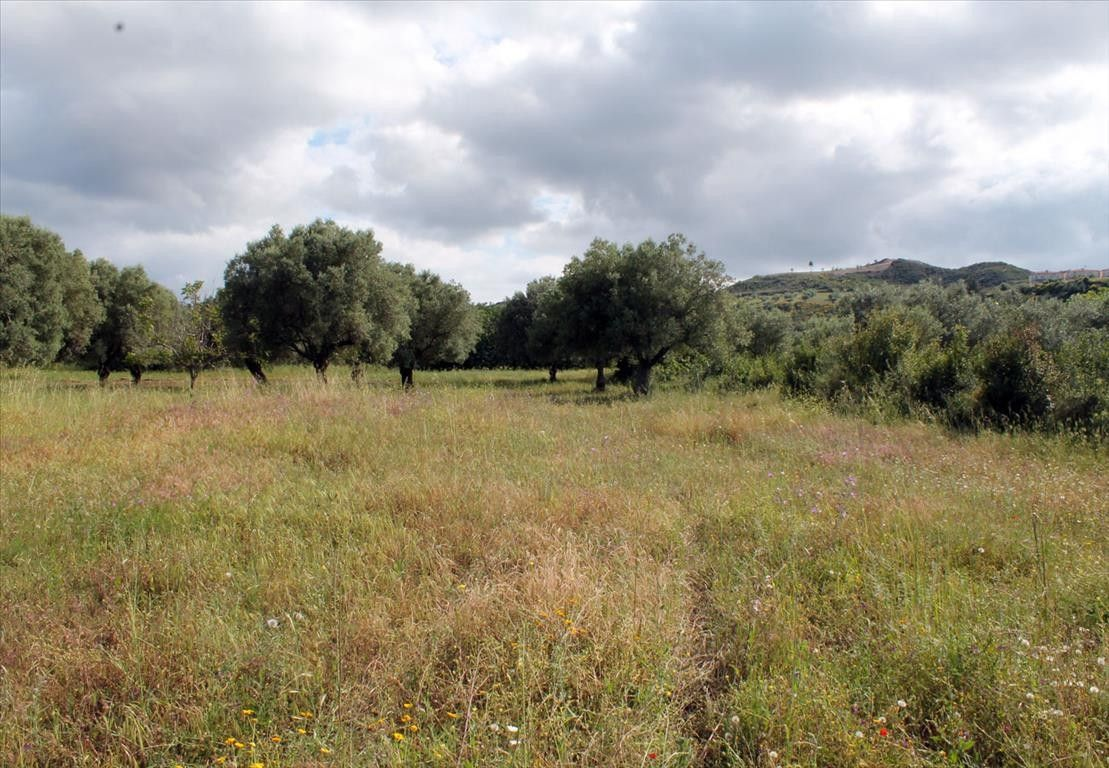 Земля Халкидики-Кассандра, Греция, 2700 сот. - фото 1