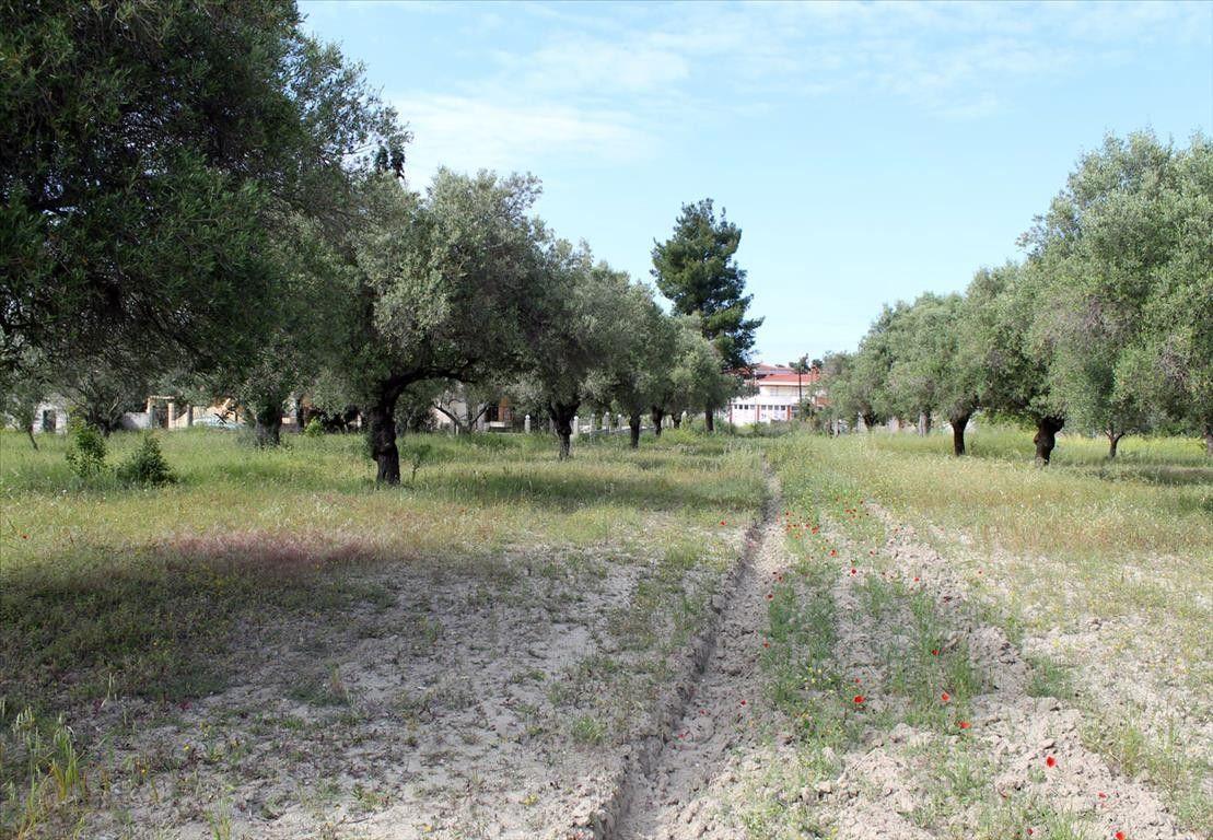 Земля Халкидики-Кассандра, Греция, 2900 сот. - фото 1
