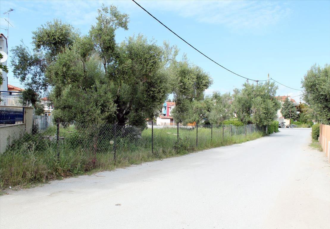 Земля Халкидики-Кассандра, Греция, 1000 сот. - фото 1