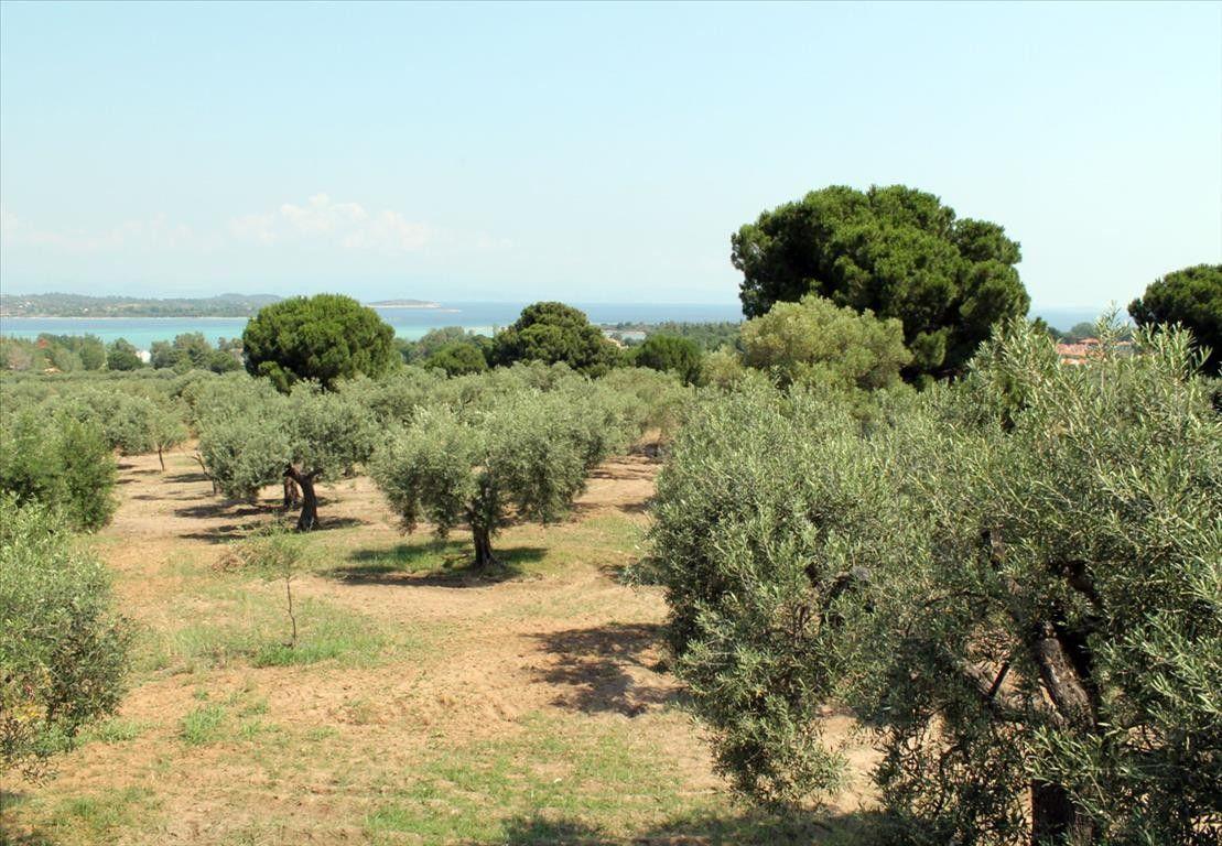 Земля Халкидики-Ситония, Греция, 4080 сот. - фото 1