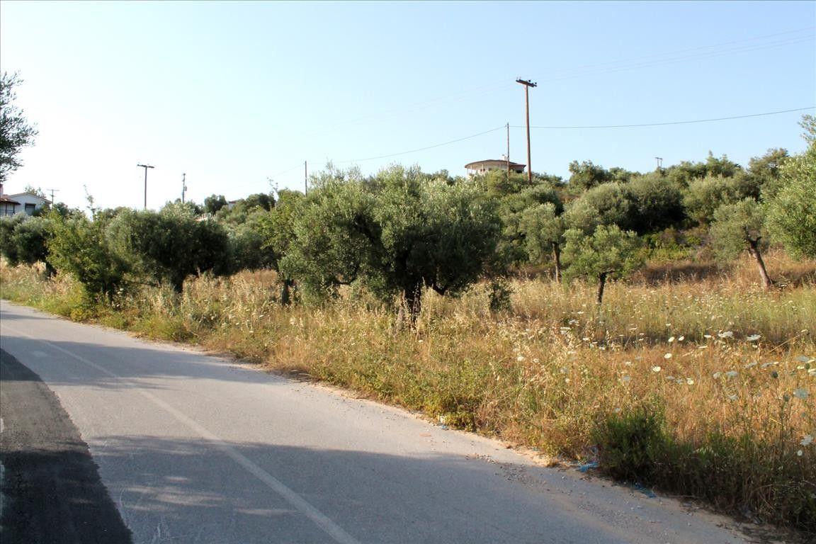Земля Халкидики-Ситония, Греция, 8000 сот. - фото 1