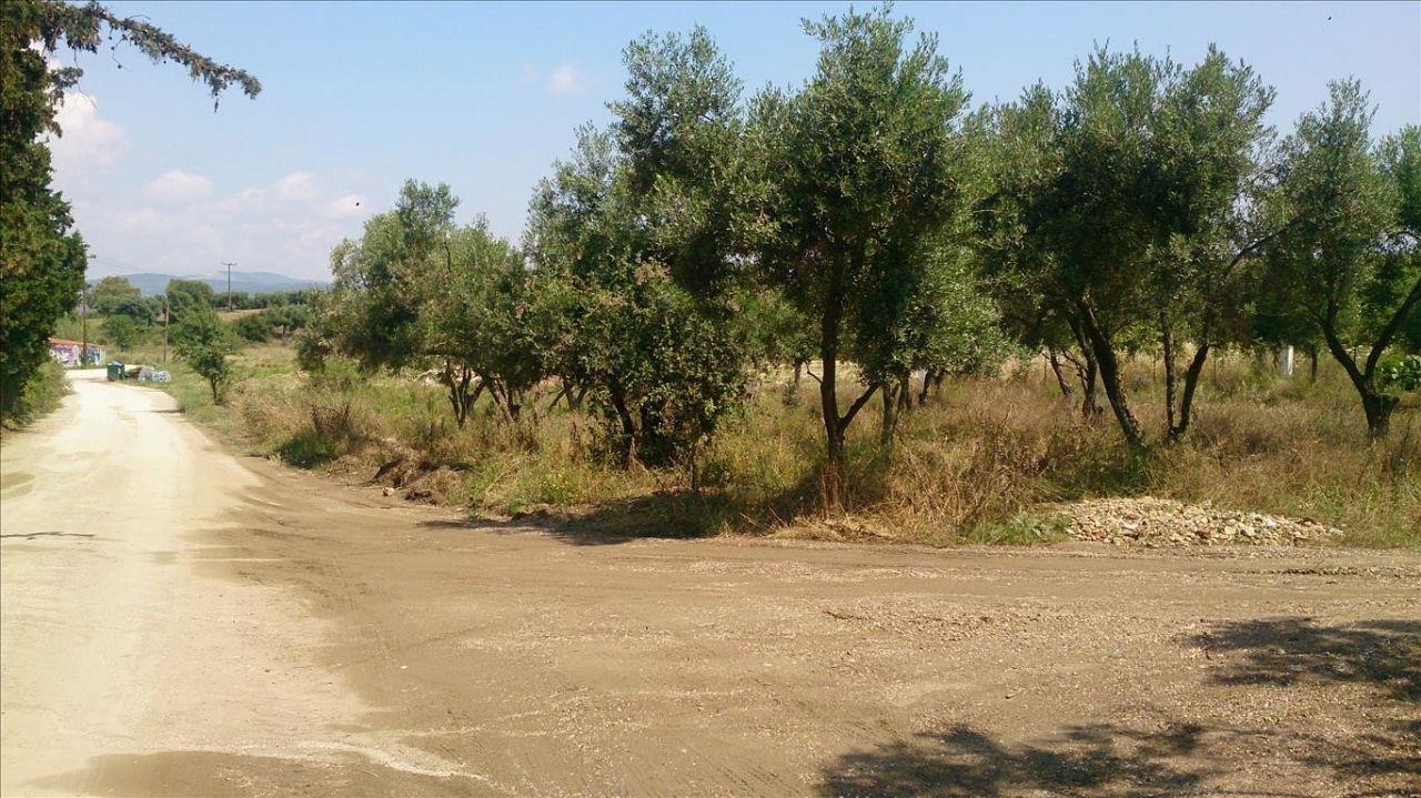 Земля Халкидики-Ситония, Греция, 15000 сот. - фото 1