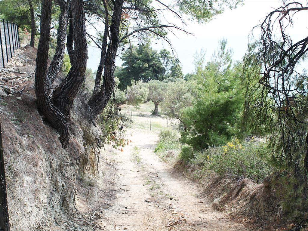 Земля Халкидики-Кассандра, Греция, 4320 сот. - фото 1
