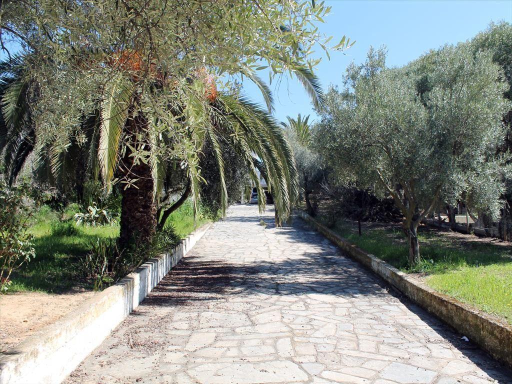 Вилла Халкидики-Кассандра, Греция, 8000 сот. - фото 1