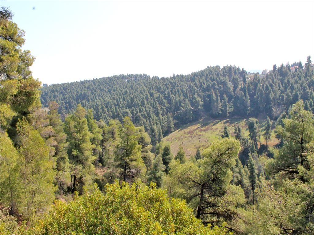 Земля Халкидики-Кассандра, Греция, 4050 сот. - фото 1