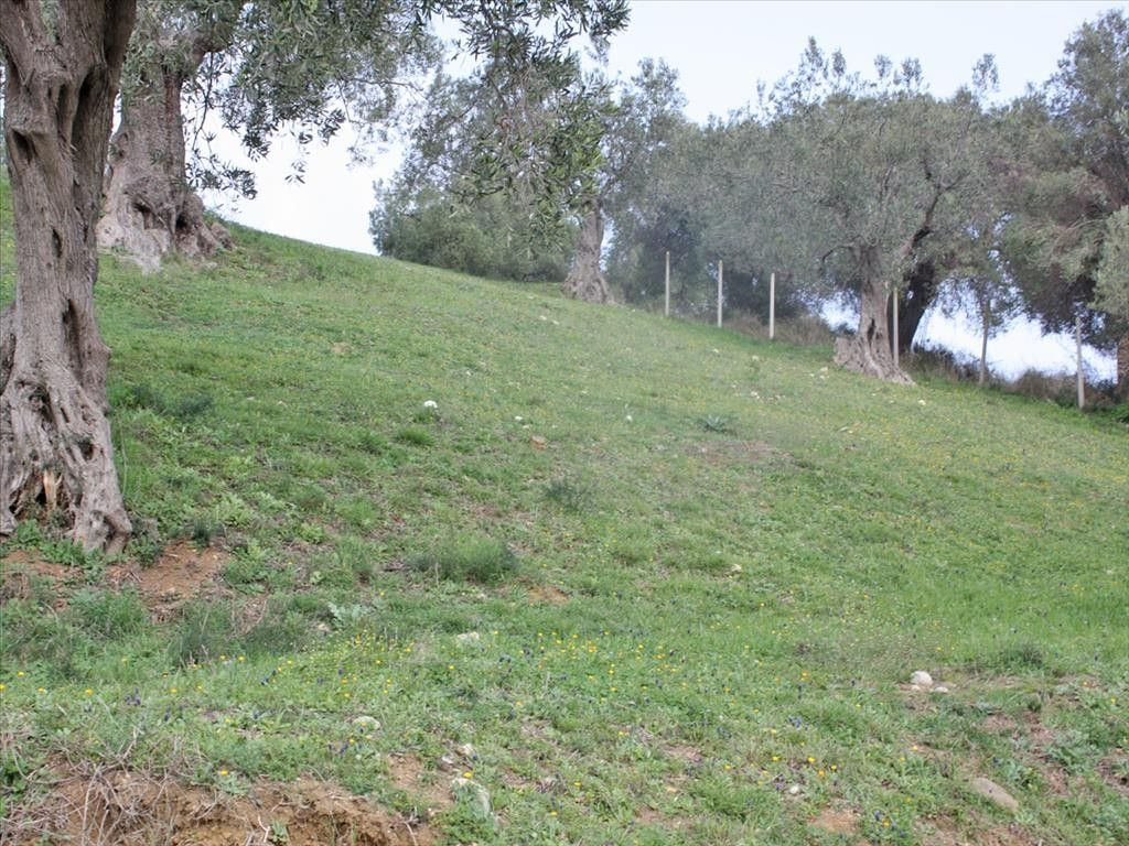 Земля Халкидики-Кассандра, Греция, 4100 сот. - фото 1