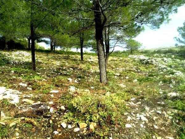 Земля в Бигово, Черногория, 7300 м2 - фото 1