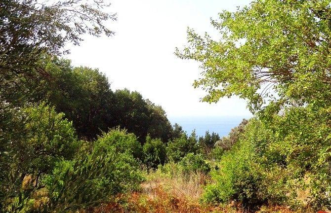 Земля в Режевичах, Черногория, 420 м2 - фото 1