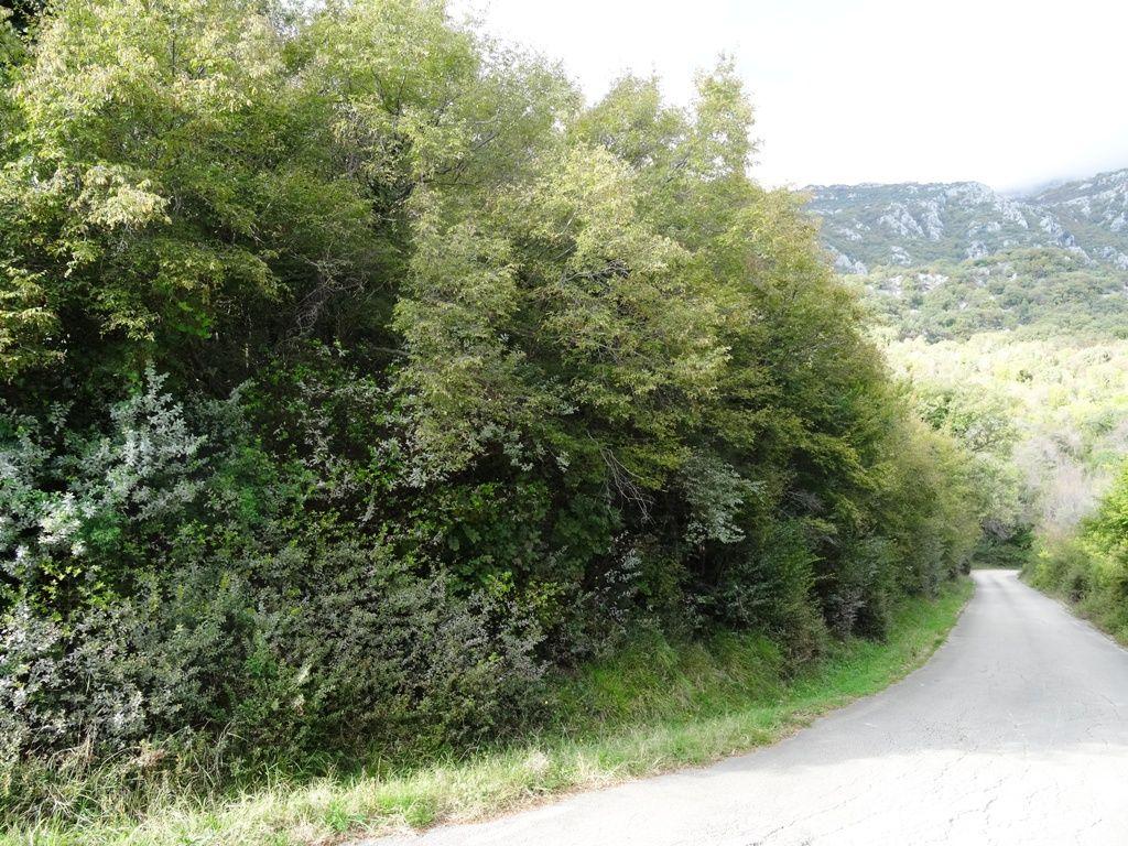 Земля в Херцеге Нови, Черногория, 6324 м2 - фото 1