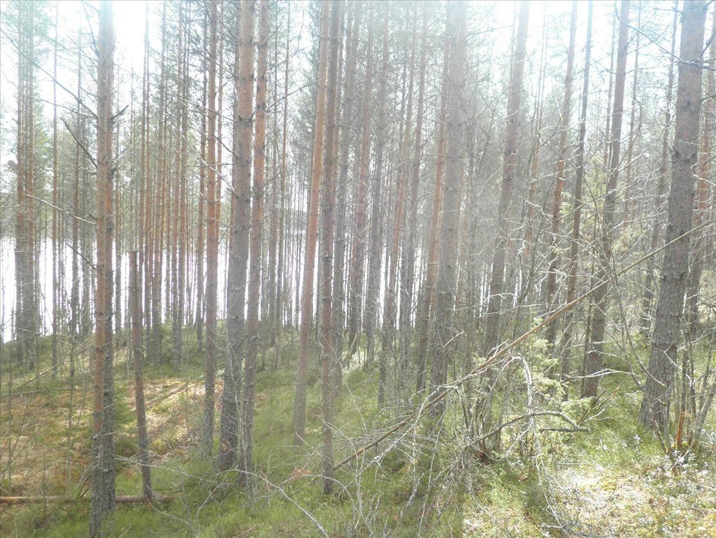 Земля в Пуумала, Финляндия, 3640 м2 - фото 1
