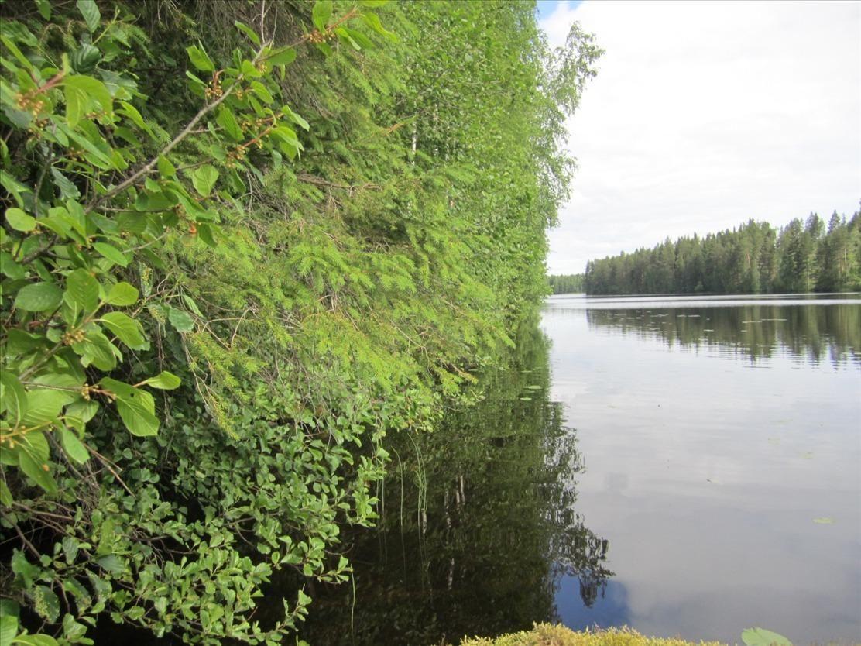 Земля в Пиексямяки, Финляндия, 113000 м2 - фото 1