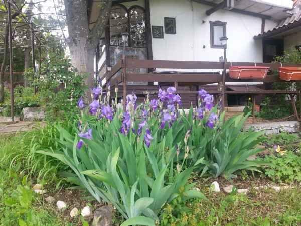 Дом в Бургасской области, Болгария, 45 м2 - фото 1