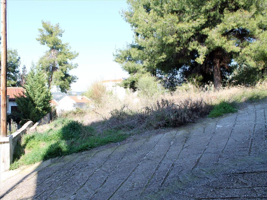Земля Халкидики-Другое, Греция, 800 м2 - фото 1