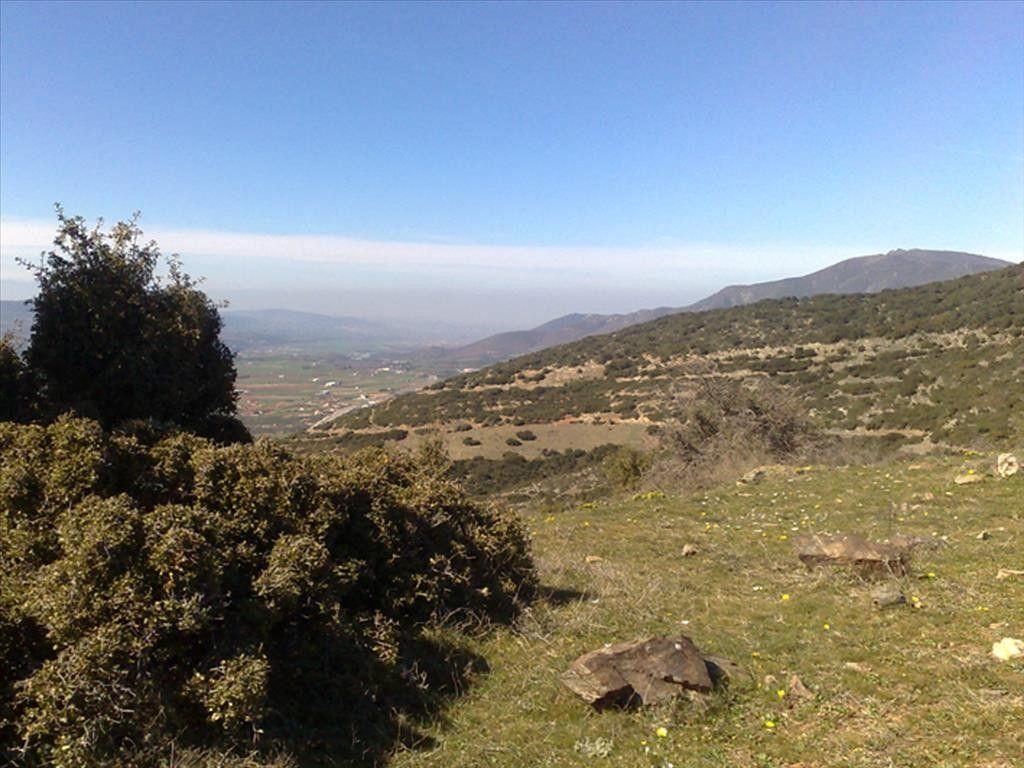Земля Халкидики-Другое, Греция, 22910 сот. - фото 1