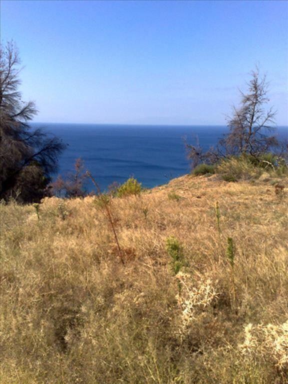 Земля Халкидики-Кассандра, Греция, 4013 сот. - фото 1