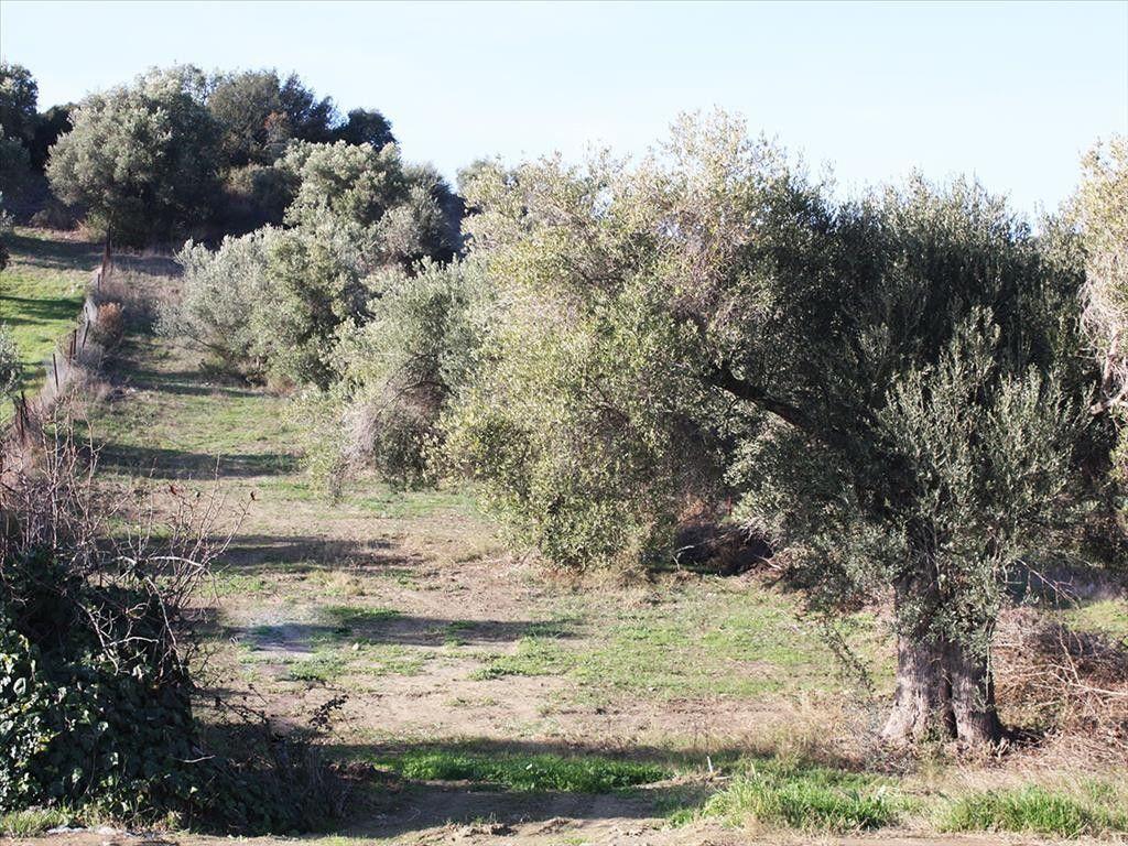 Земля Халкидики-Кассандра, Греция, 1268 м2 - фото 1