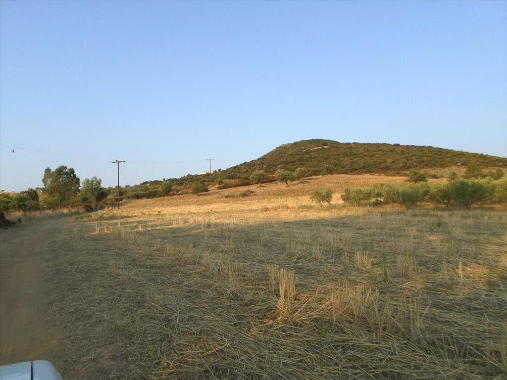 Земля Халкидики-Афон, Греция, 7500 сот. - фото 1