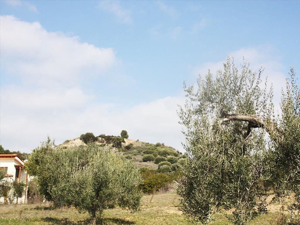 Земля Халкидики-Кассандра, Греция, 8015 сот. - фото 1