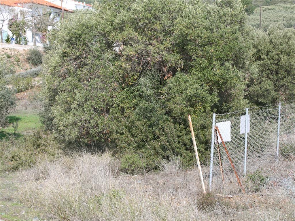 Земля Халкидики-Ситония, Греция, 13244 сот. - фото 1