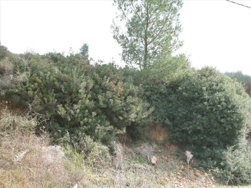 Земля Халкидики-Ситония, Греция, 3840 сот. - фото 1