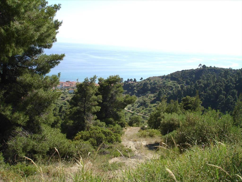 Земля Халкидики-Кассандра, Греция, 4465 сот. - фото 1