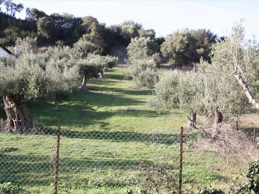 Земля Халкидики-Кассандра, Греция, 1496 м2 - фото 1