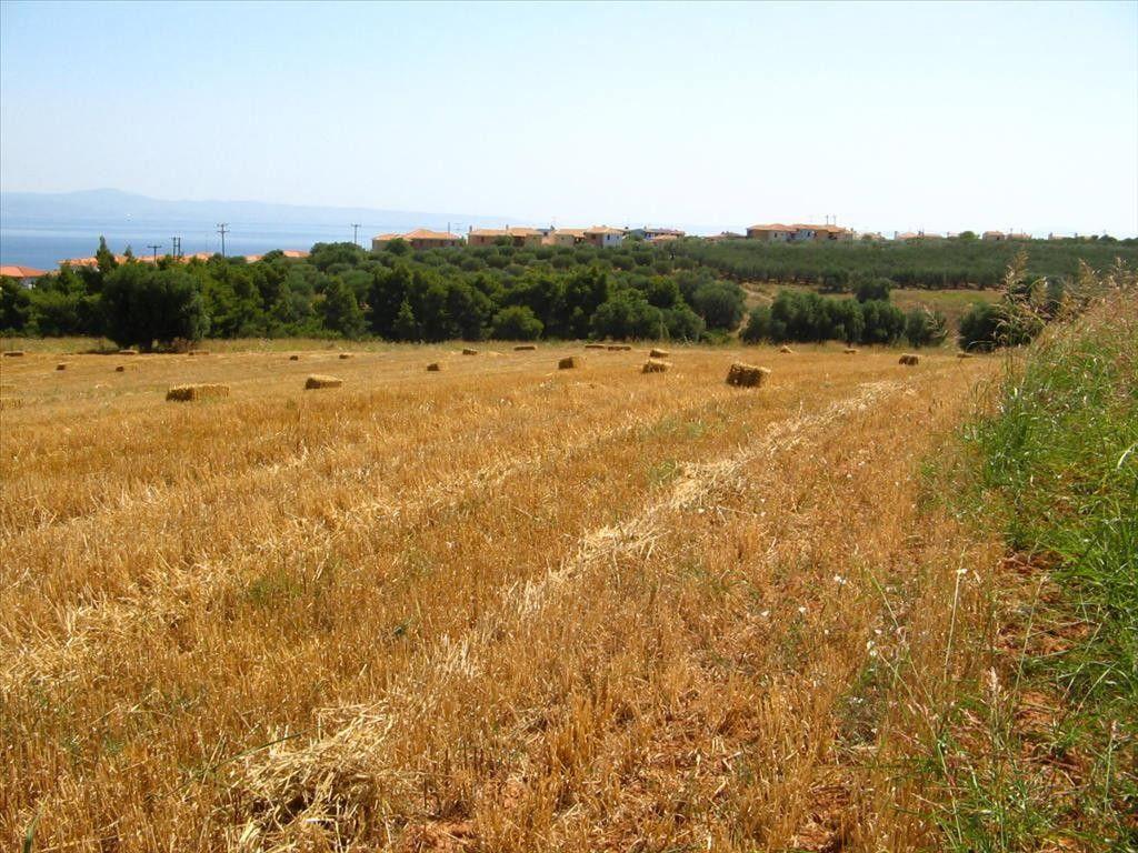 Земля Халкидики-Кассандра, Греция, 12115 м2 - фото 1