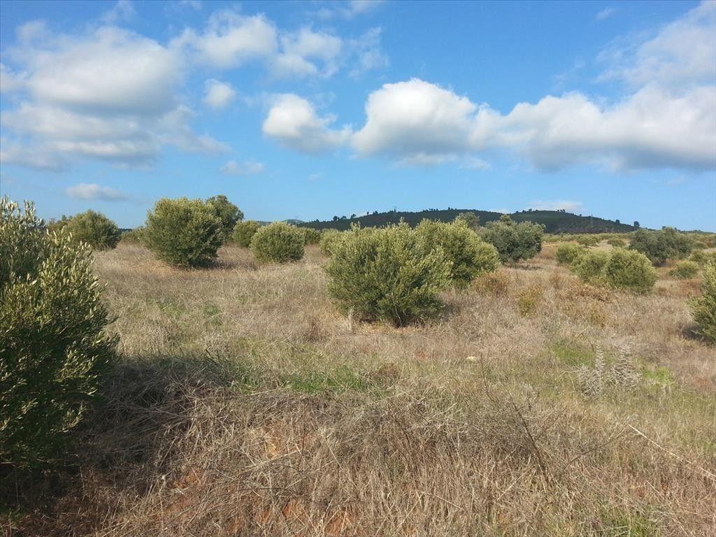 Земля Халкидики-Ситония, Греция, 13828 сот. - фото 1