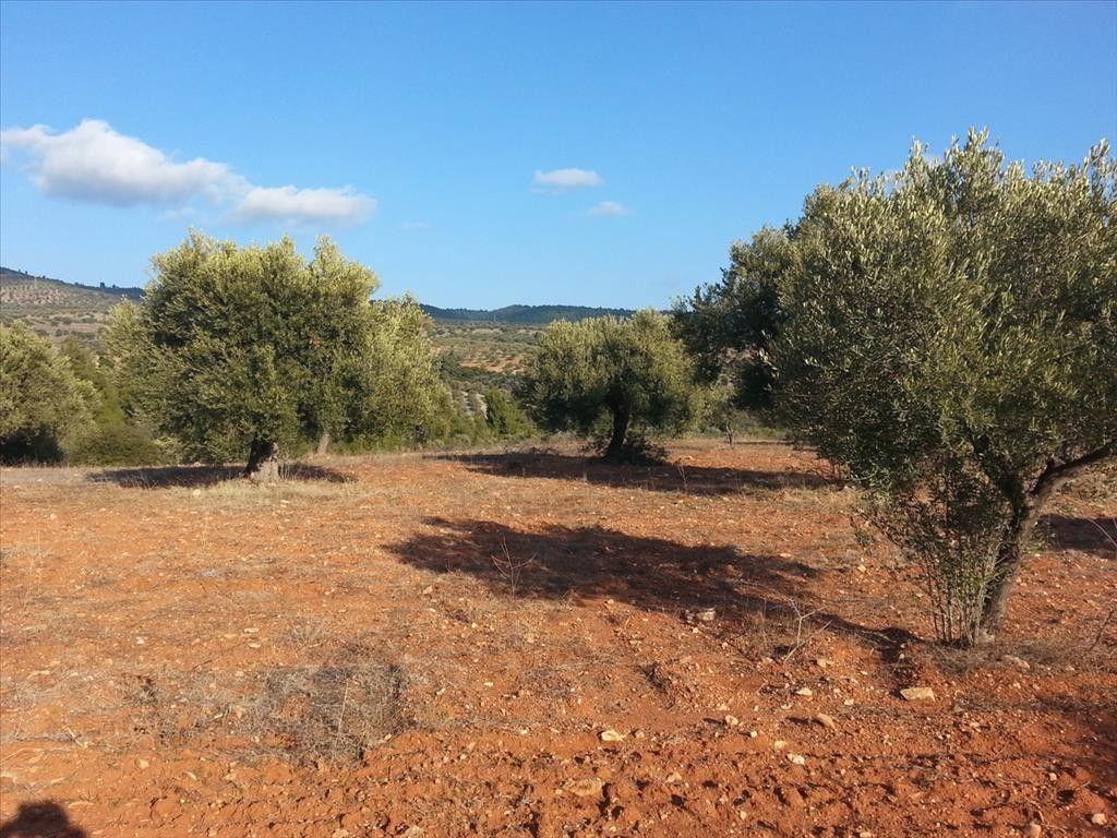 Земля Халкидики-Ситония, Греция, 5066 сот. - фото 1