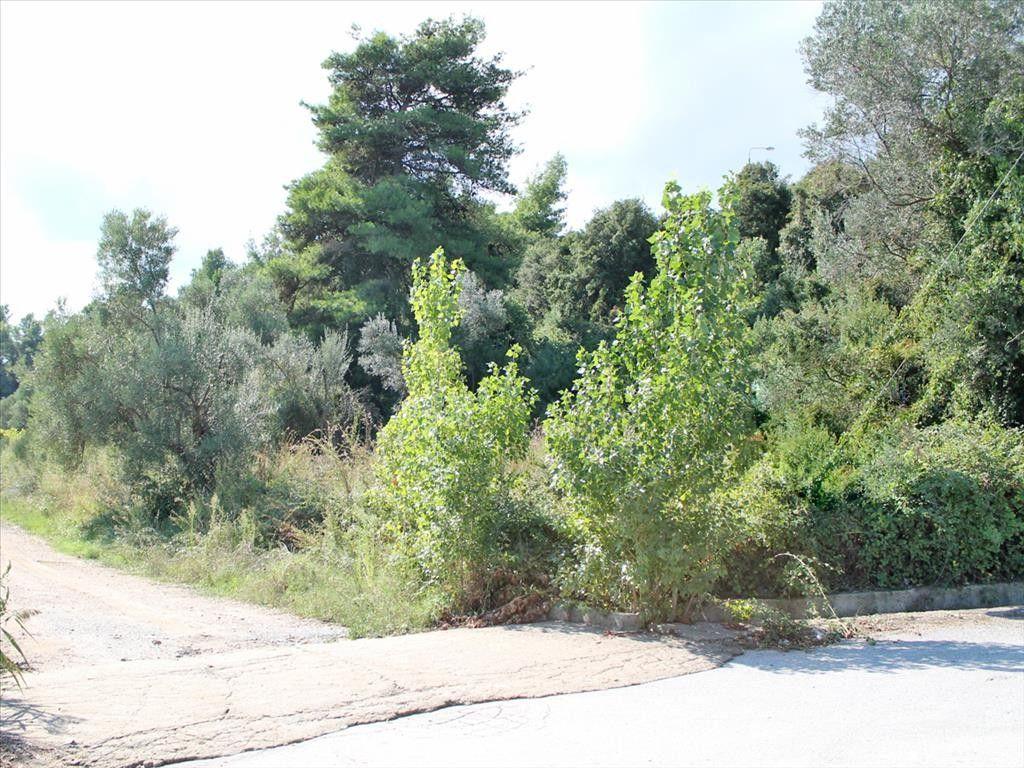 Земля Халкидики-Кассандра, Греция, 2000 м2 - фото 1