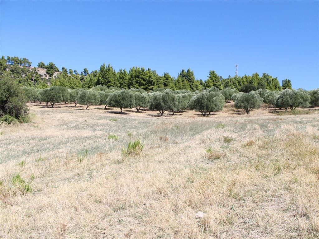 Земля Халкидики-Кассандра, Греция, 6000 сот. - фото 1