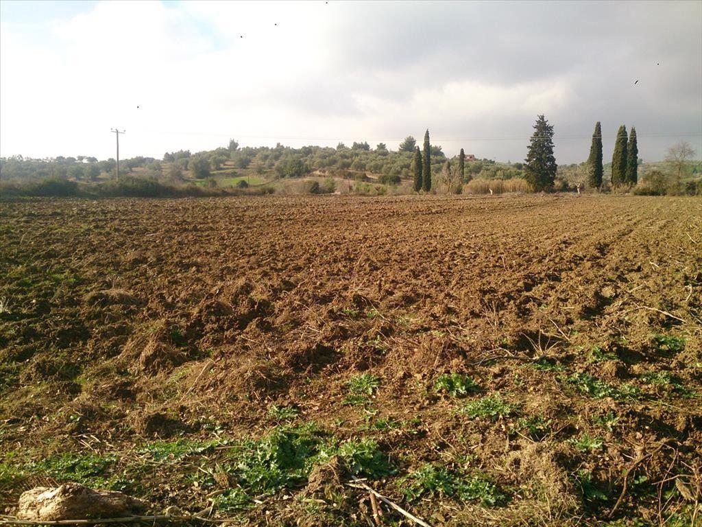 Земля Халкидики-Кассандра, Греция, 29643 сот. - фото 1