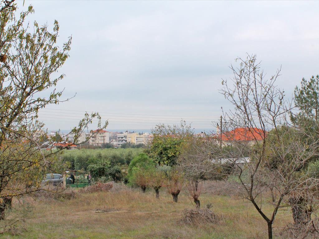 Земля Халкидики-Другое, Греция, 3000 м2 - фото 1